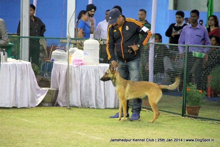 belgian shepherd,ex-9,sw-114,, Jamshedpur Dog Show 2014, DogSpot.in