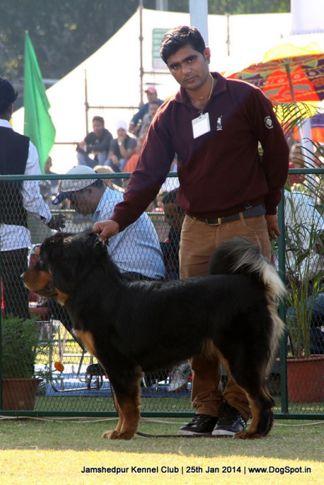 ex-171,sw-114,tibetan mastiff,, Jamshedpur Dog Show 2014, DogSpot.in
