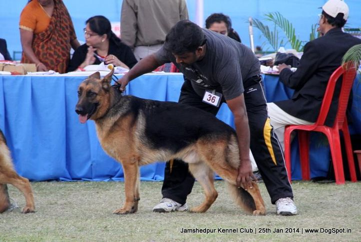 ex-36,german shepherd,sw-114,, Jamshedpur Dog Show 2014, DogSpot.in