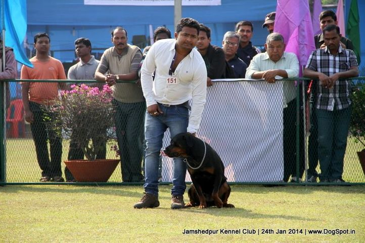 rottweiler,, Jamshedpur Obedience Dog Show 2014 , DogSpot.in