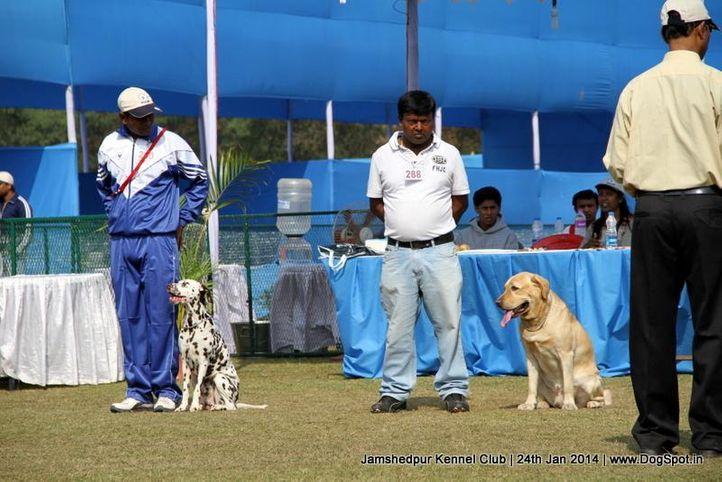 jamshedpur obedience dog show 2014, Jamshedpur Obedience Dog Show 2014 , DogSpot.in