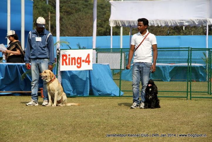 jamshedpur obedience dog show 2014, Jamshedpur Obedience Dog Show 2014 , DogSpot.in