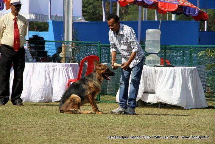 german shepherd,, Jamshedpur Obedience Dog Show 2014 , DogSpot.in
