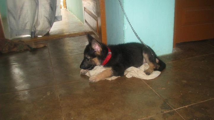 jockey forever, JOCKEY! Feeling sleepy?? Haaa yes., DogSpot.in