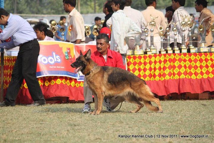 ex-209,gsd,sw-42,, CARINE OF SUPERSTAR, German Shepherd Dog, DogSpot.in