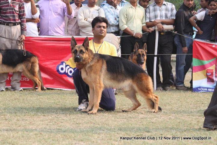 ex-202,gsd,sw-42,, DARIO VON DER PISTE TROPHE, German Shepherd Dog, DogSpot.in