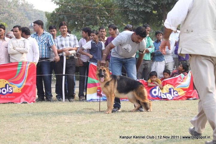 gsd,sw-42,, Kanpur Dog Show 2011, DogSpot.in