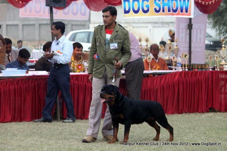 ex-149,rottweiler,sw-72,, XAVIER VON KELEMEN, Rottweiler, DogSpot.in