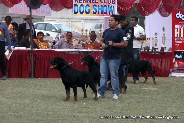 ex-158,rottweiler,sw-72,, CH RAMBO VON DER BLAUEN WELLE, Rottweiler, DogSpot.in