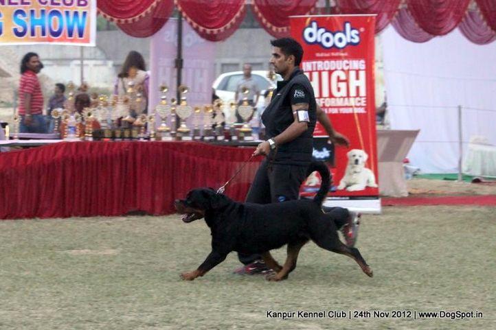ex-159,rottweiler,sw-72,, UNO VOM HAUS ENGEL, Rottweiler, DogSpot.in