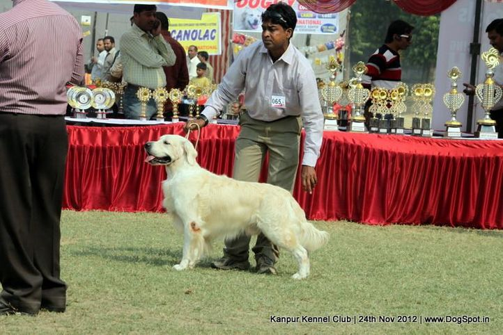 ex-65,golden retriever,sw-72,, BONETT BRIDE BLENDED WHISKEY, Golden Retriever, DogSpot.in