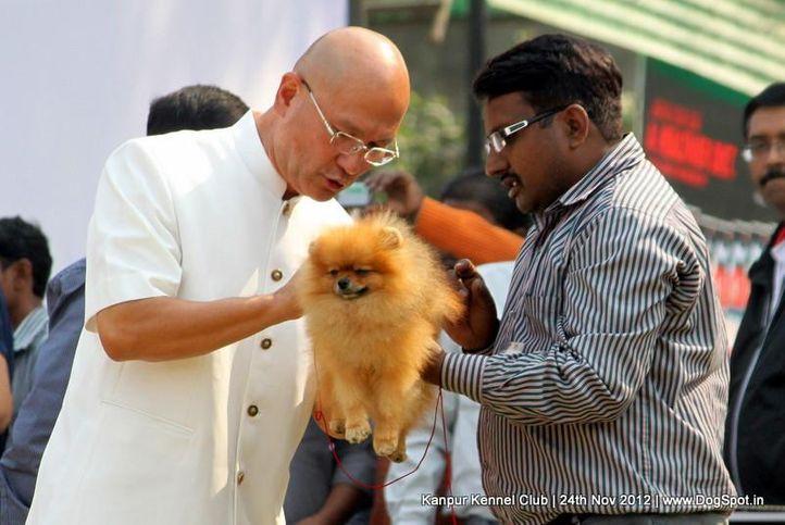 judging,pomeranian,sw-72,, Kanpur Dog Show 2012, DogSpot.in