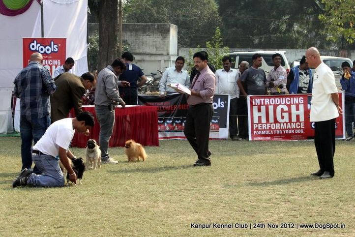 judging,sw-72,toy group,, Kanpur Dog Show 2012, DogSpot.in
