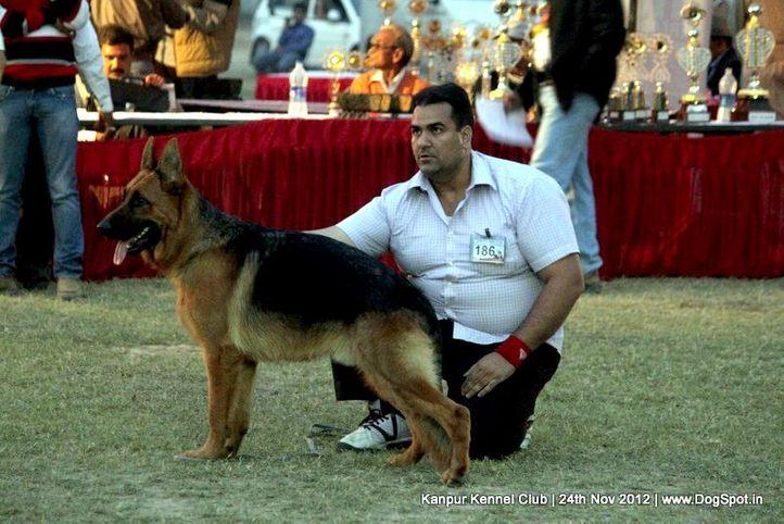 ex-186,german shepherd dog,sw-72,, CLICK, German Shepherd Dog, DogSpot.in