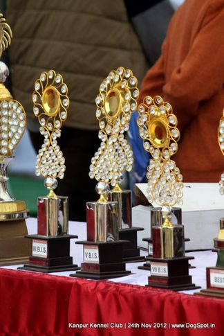 show trophy,sw-72,, Kanpur Dog Show 2012, DogSpot.in