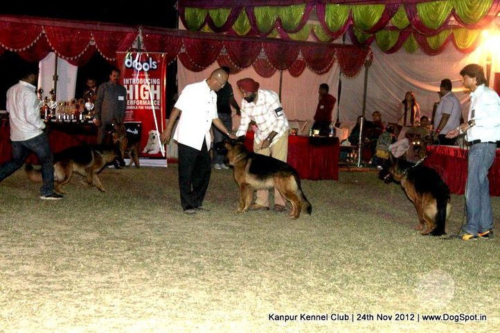 german shepherd dog,judging,sw-72,, Kanpur Dog Show 2012, DogSpot.in