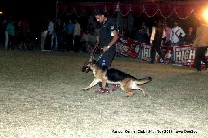 german shepherd dog,sw-72,, Kanpur Dog Show 2012, DogSpot.in