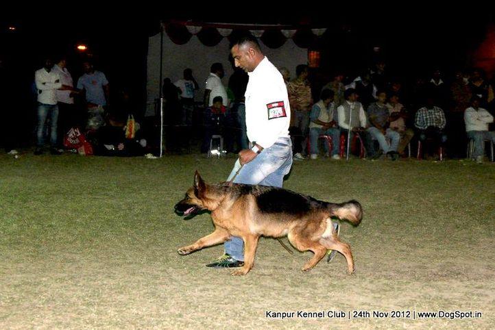 ex-192,german shepherd dog,sw-72,, KITTY OF ZEDEX, German Shepherd Dog, DogSpot.in
