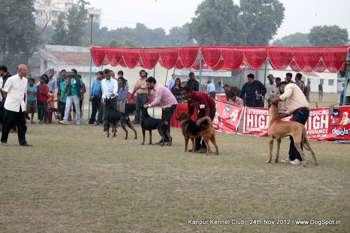judging,sw-72,working group,, Kanpur Dog Show 2012, DogSpot.in