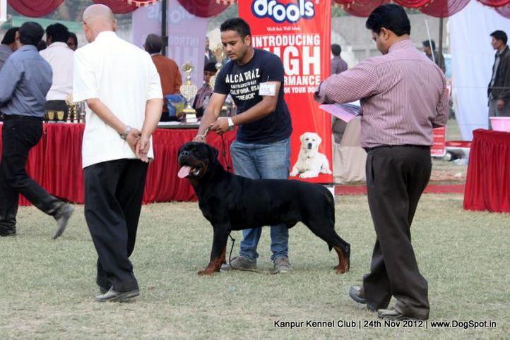 ex-158,judging,rottweiler,sw-72,, CH RAMBO VON DER BLAUEN WELLE, Rottweiler, DogSpot.in