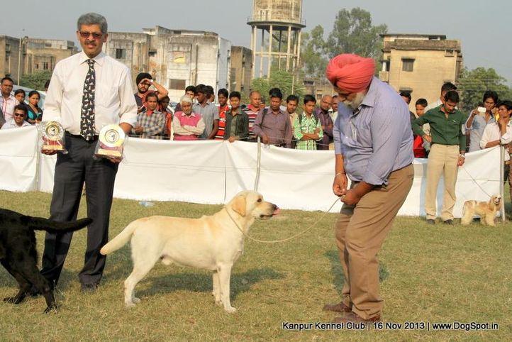 ex-72,labrador retriever,rbob,sw-97,, Kanpur Dog Show 2013, DogSpot.in