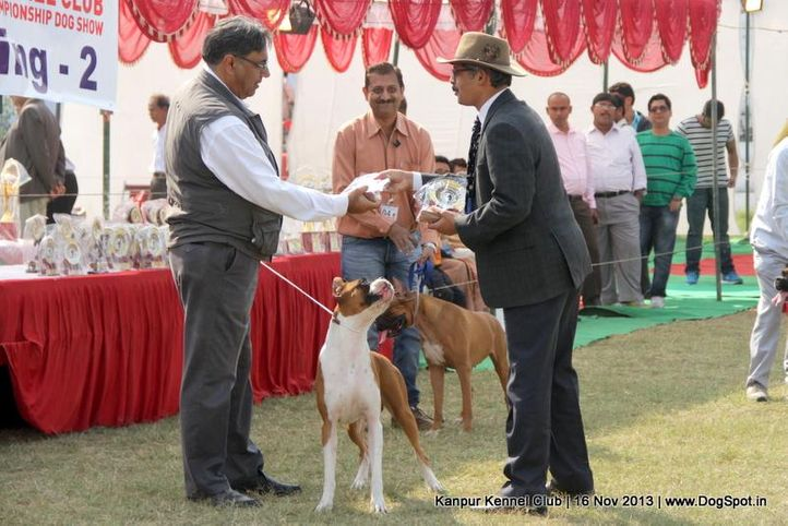 bob,boxer,ex-97,sw-97,, Kanpur Dog Show 2013, DogSpot.in