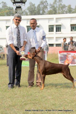 dobermann,ex-126,rbog,sw-97,, Kanpur Dog Show 2013, DogSpot.in
