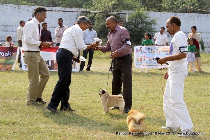 bog,ex-12,pug,sw-97,, Kanpur Dog Show 2013, DogSpot.in