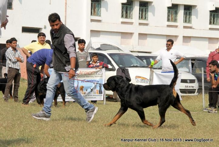 ex-153,rottweiler,sw-97,, Kanpur Dog Show 2013, DogSpot.in
