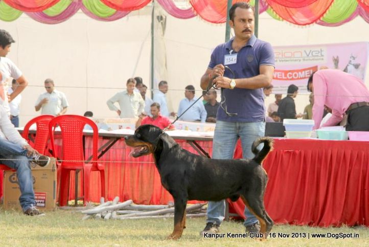 ex-154,rottweiler,sw-97,, Kanpur Dog Show 2013, DogSpot.in