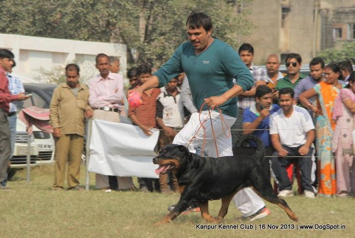 ex-158,rottweiler,sw-97,, Kanpur Dog Show 2013, DogSpot.in