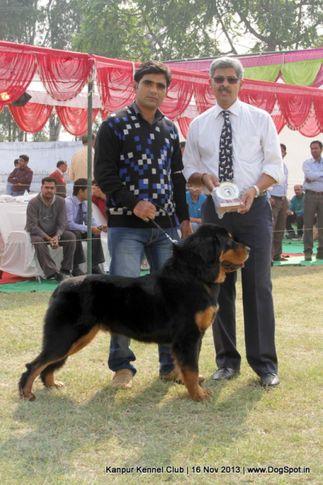 ex-172,sw-97,tibetan mastiff,, Kanpur Dog Show 2013, DogSpot.in