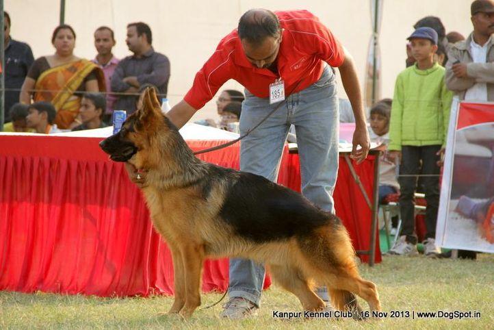ex-185,german shepherd,sw-97,, Kanpur Dog Show 2013, DogSpot.in