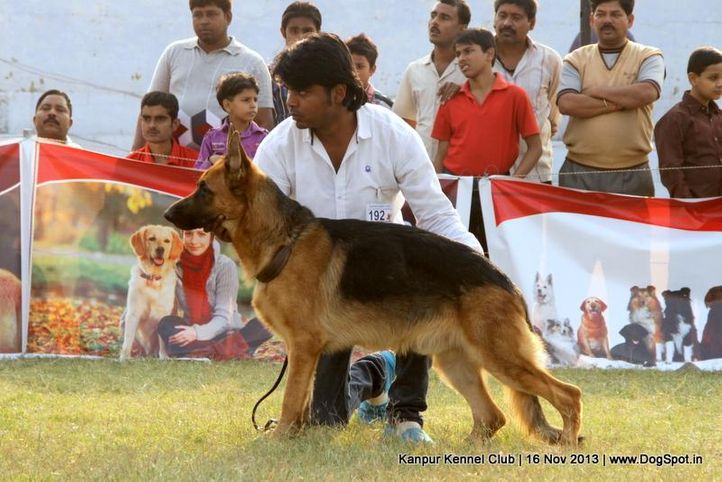 ex-192,german shepherd,sw-97,, Kanpur Dog Show 2013, DogSpot.in