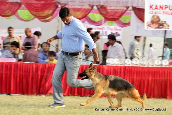 ex-187,german shepherd,sw-97,, Kanpur Dog Show 2013, DogSpot.in