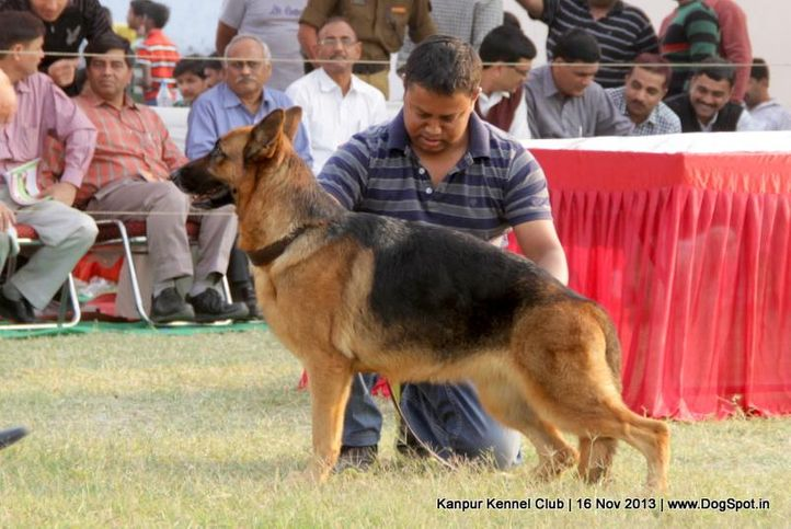 german shepherd,sw-97,, Kanpur Dog Show 2013, DogSpot.in