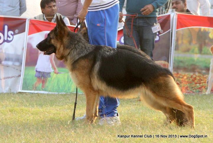 german shepherd,sw-97,, Kanpur Dog Show 2013, DogSpot.in