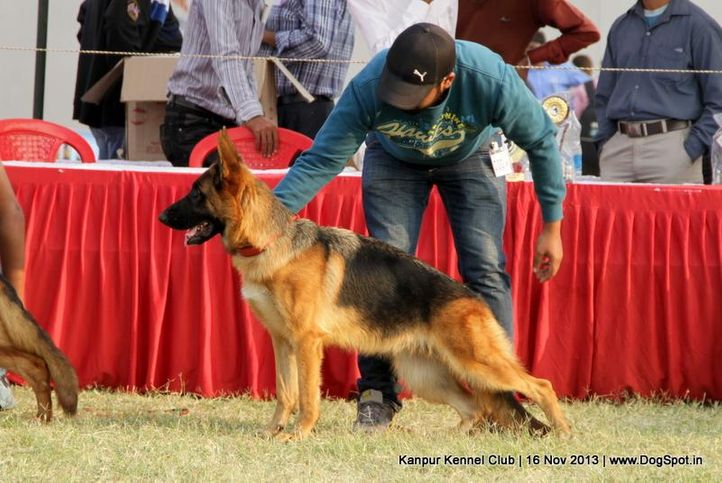 ex-200,german shepherd,sw-97,, Kanpur Dog Show 2013, DogSpot.in