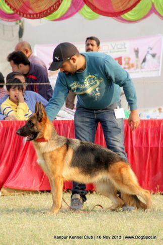 ex-200,german shepherd,sw-97,, Kanpur Dog Show 2013, DogSpot.in