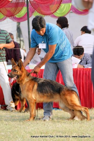 ex-198,german shepherd,sw-97,, Kanpur Dog Show 2013, DogSpot.in