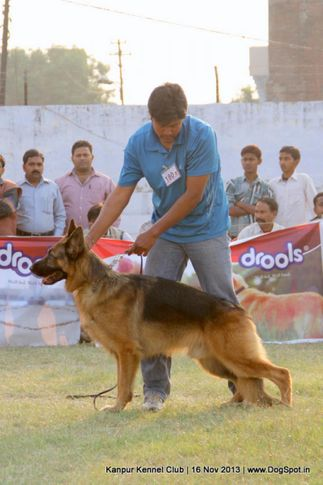 ex-180,german shepherd,sw-97,, Kanpur Dog Show 2013, DogSpot.in