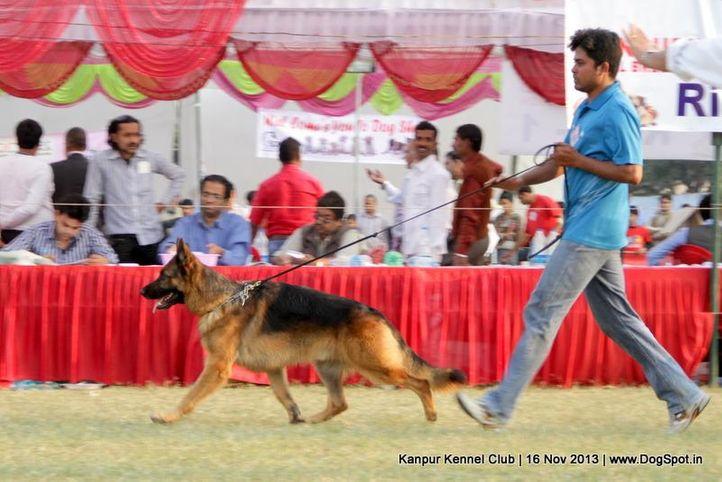 ex-180,german shepherd,sw-97,, Kanpur Dog Show 2013, DogSpot.in