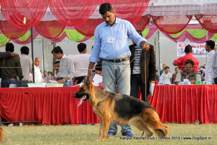 ex-188,german shepherd,sw-97,, Kanpur Dog Show 2013, DogSpot.in