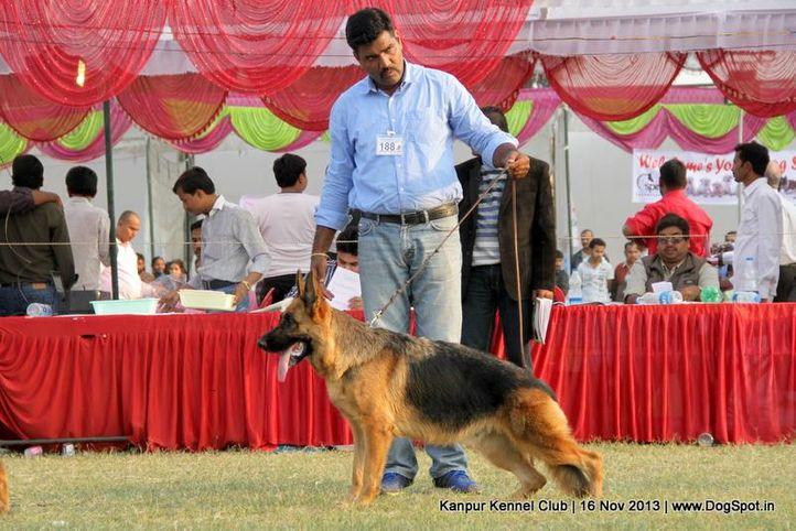ex-188,german shepherd,sw-97,, Kanpur Dog Show 2013, DogSpot.in