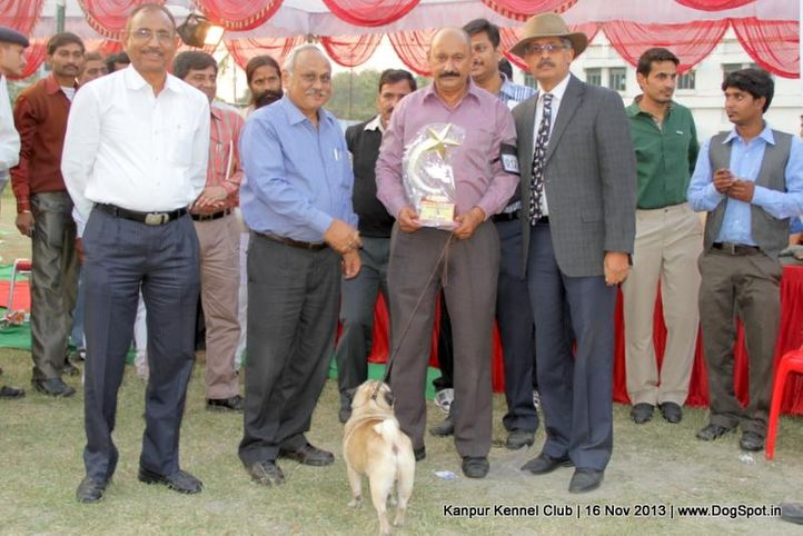 bis,ex-12,pug,sw-97,, Kanpur Dog Show 2013, DogSpot.in