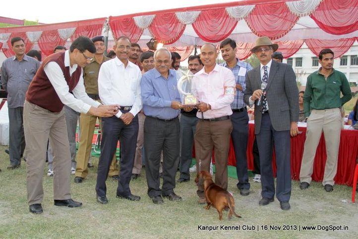 bis,dachshund,ex-47,sw-97,, Kanpur Dog Show 2013, DogSpot.in