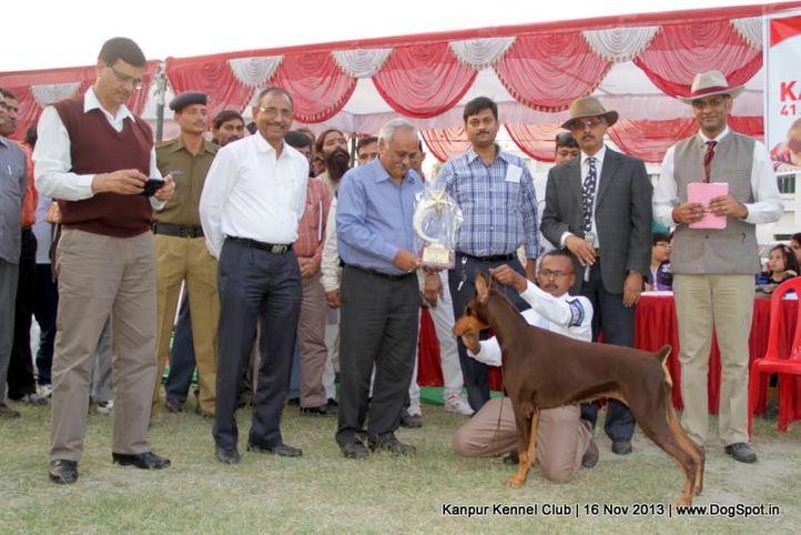 bis,dobermann,ex-126,sw-97,, Kanpur Dog Show 2013, DogSpot.in