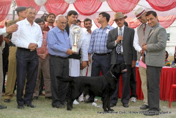 bis,ex-75,labrador retriever,sw-97,, Kanpur Dog Show 2013, DogSpot.in