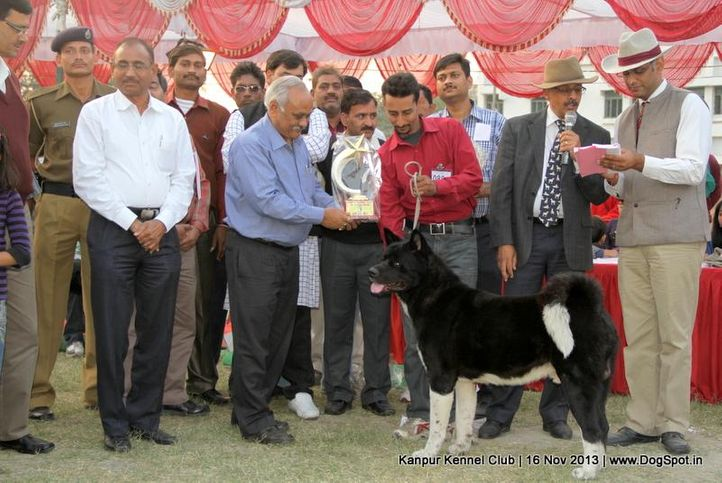 akita,bbi,bis,ex-89,sw-97,, Kanpur Dog Show 2013, DogSpot.in
