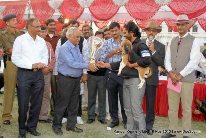 beagle,bis,bps,ex-28,sw-97,, Kanpur Dog Show 2013, DogSpot.in